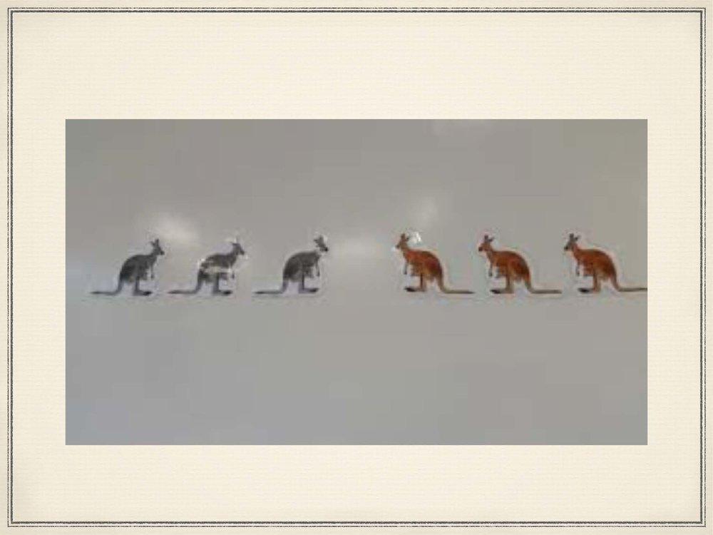Jumping Kangaroos_Page_04.jpg