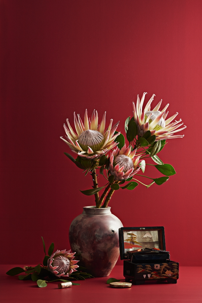 "These spectacular King Protea are grown in Tauranga, and are pictured on a background of Dulux ""Welcome Bay""."