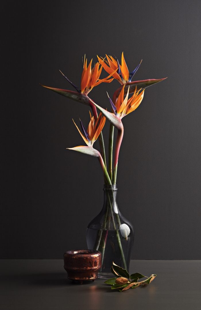 "Birds of Paradise are commercially grown in Drury, South Auckland, and are pictured on a background of Dulux ""Glenbrook""."
