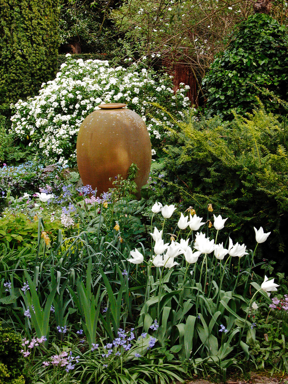 '07TurnEnd,MonicaYoungUrn,Choisya,TulipaWhiteTriumphator.jpg
