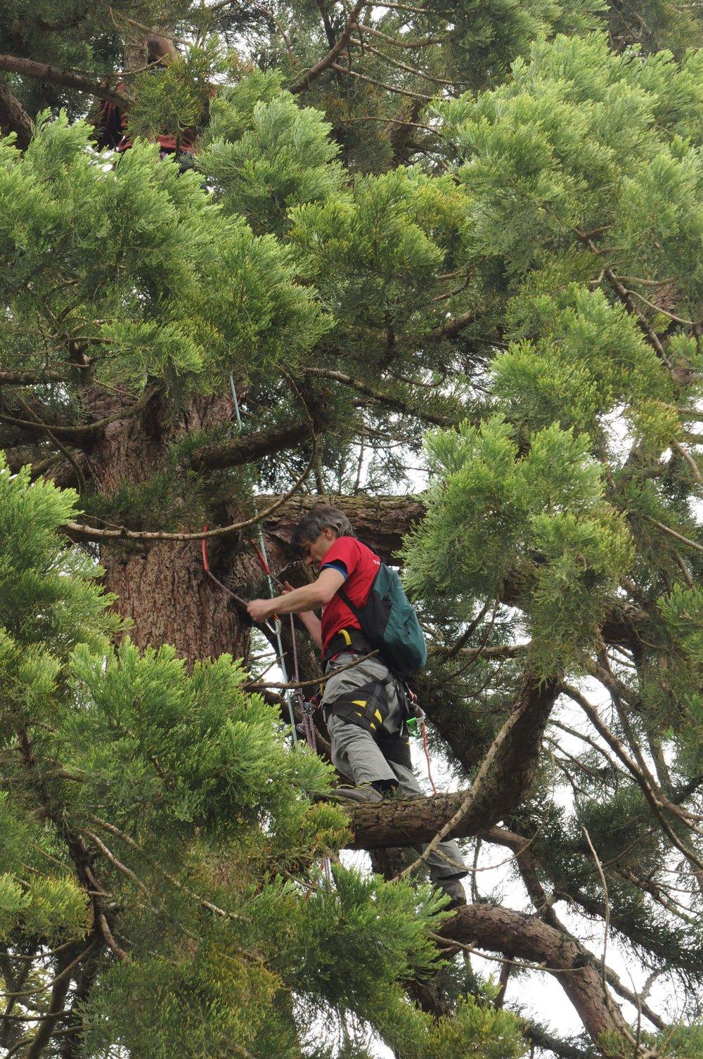 Michael and Rachel climbing the Giant Sequoia 2.jpg