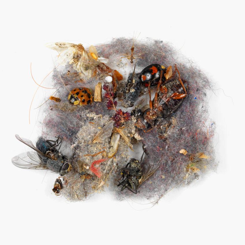 Dust #87: Natural History Museum No.2 ©Klaus Pichler