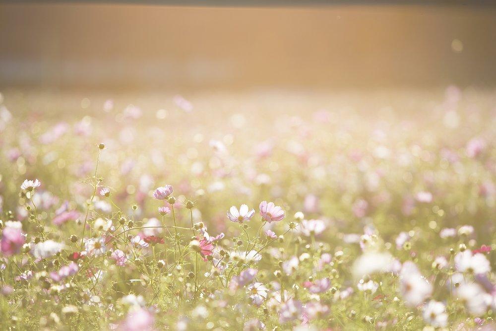 wazig bloemenveld.jpg