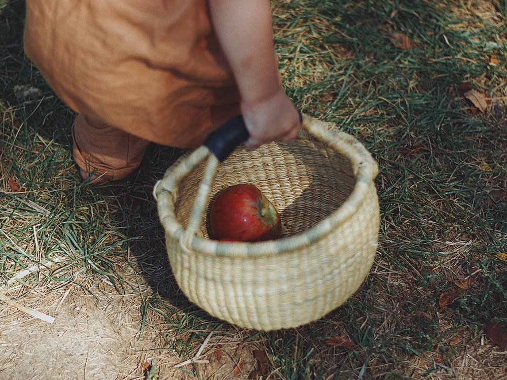 The first few apples of the day | Door Creek Orchard | Cottage Grove, WI