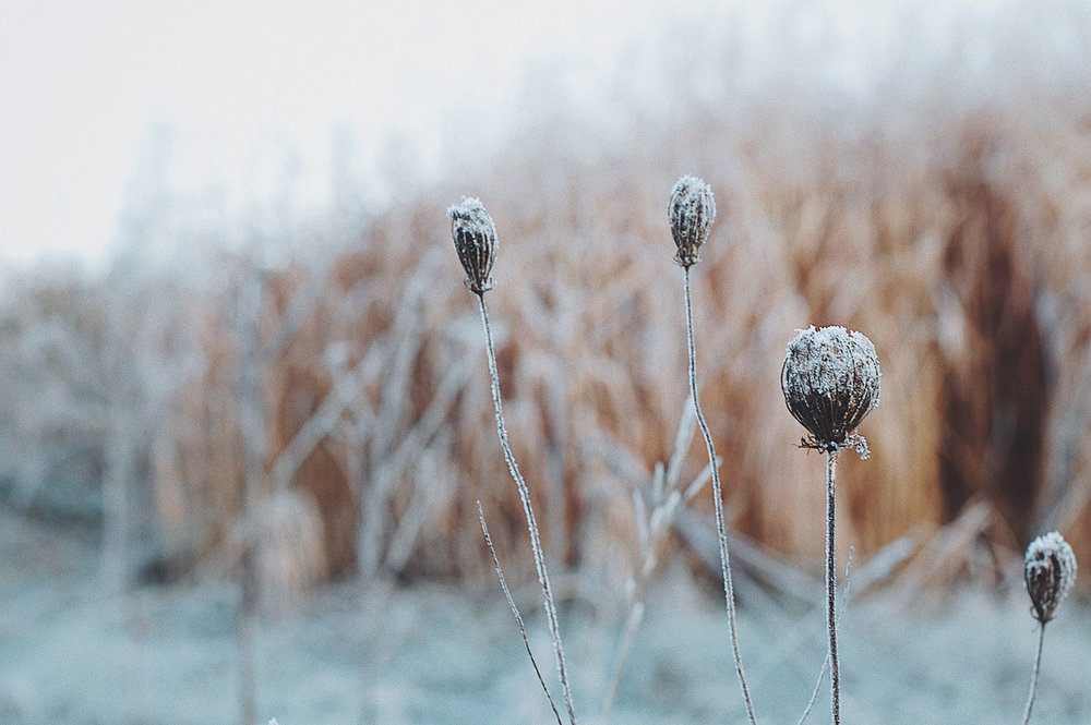 First Frost | 2017