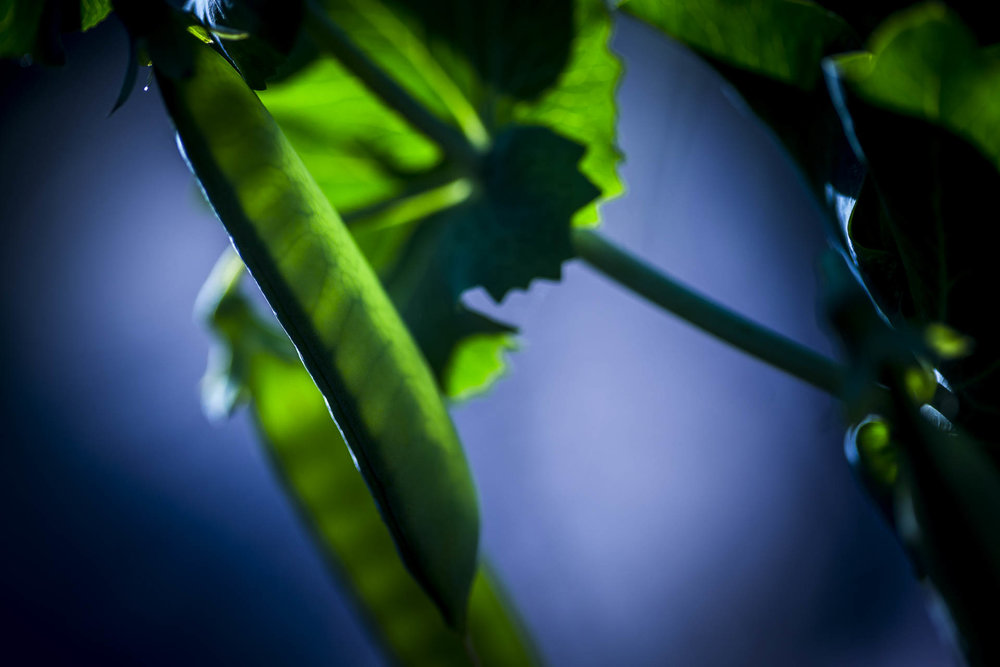 domaine_dablon_potager©stephaneleroy-1429.jpg