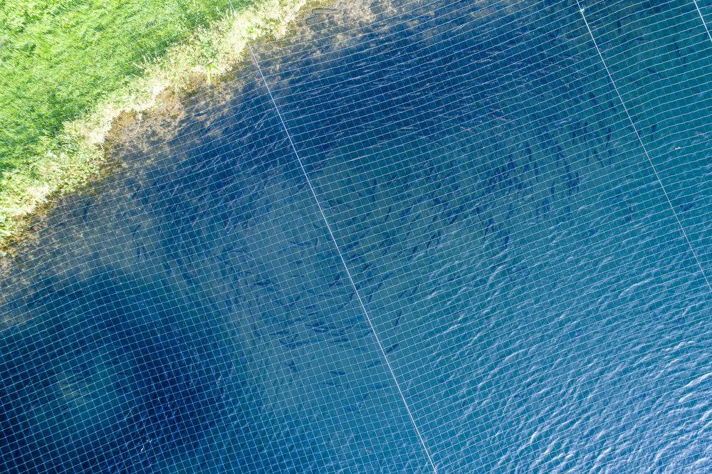 actalia-pisciculture_de_l_eure_normandie-©Stephane Leroy-DJI_0260.jpg