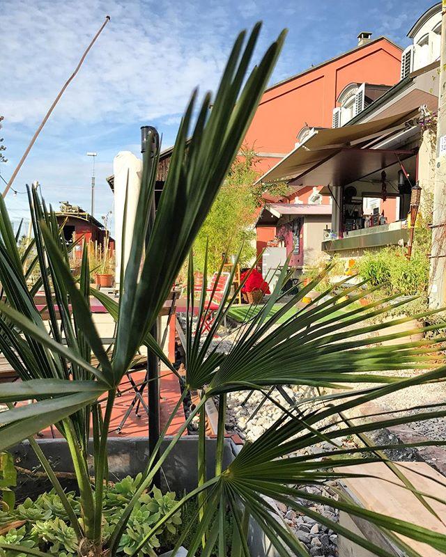 🌿🌴Frühlingsgefühle☀️🌿 - - #baselswizz - - #basel #baselswitzerland #lovebasel #basel_ig #unibasel #switzerland_basel #basilea #bâle #frühlingsgefühle #oktober #bahnhof #stjohann #stellwerk #garten #giardino #urbano #october #sunnyday #schweiz #svizzera #suisse #switzerland #switzerlandtrip #switzerlandwonderland #switzerlandpictures #visitswitzerland #amazingswitzerland #ig_switzerland
