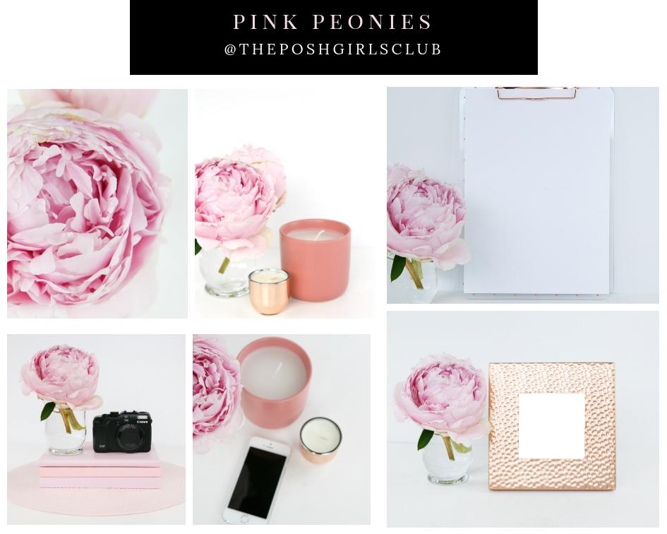 Pink Peonies $5