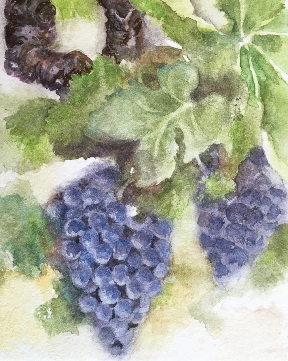 grapes+on+the+vine.jpg