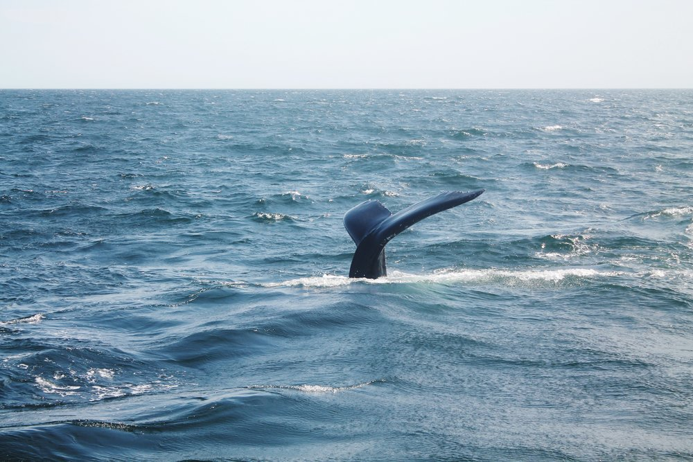 Whale Tail.