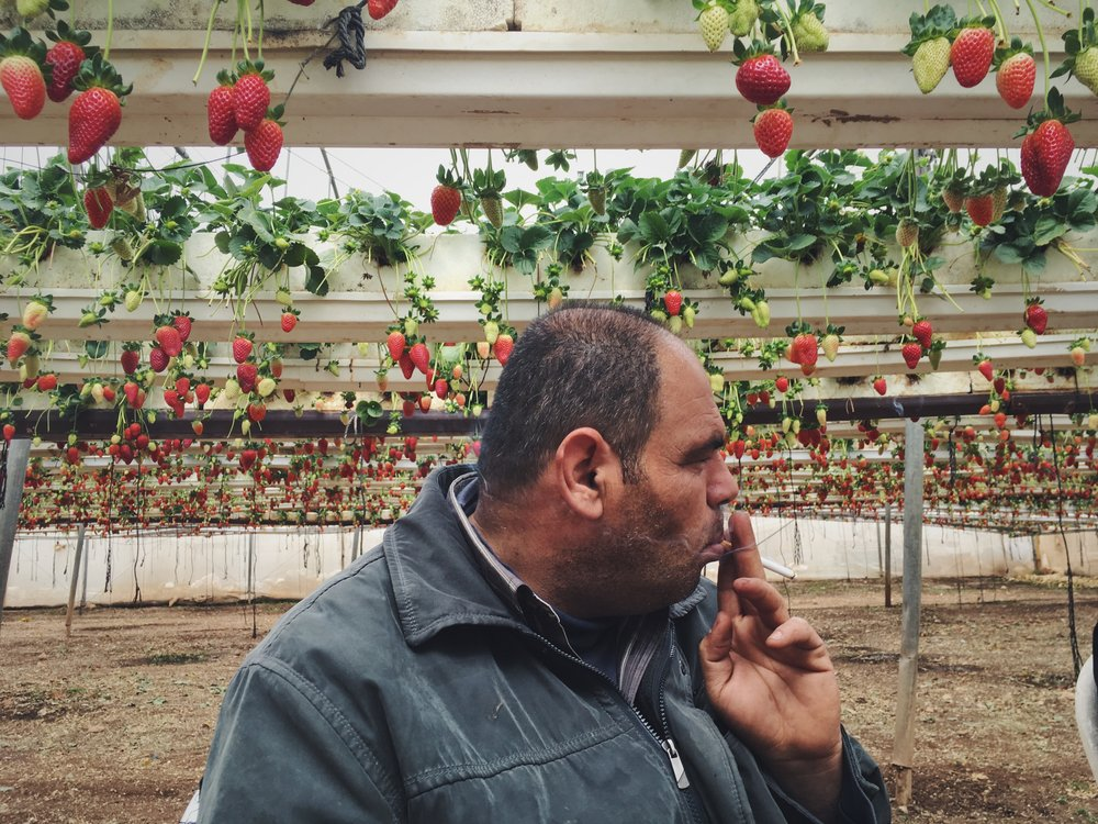 "Omran Shadid, a strawberry farmer near the northern West Bank town of Jenin, takes a cigarette break. Strawberries came to the West Bank in 2009 and Omran invested in them because ""The appearance is attractive,"" he says. ""It gives you nice art, good price and a good time."""
