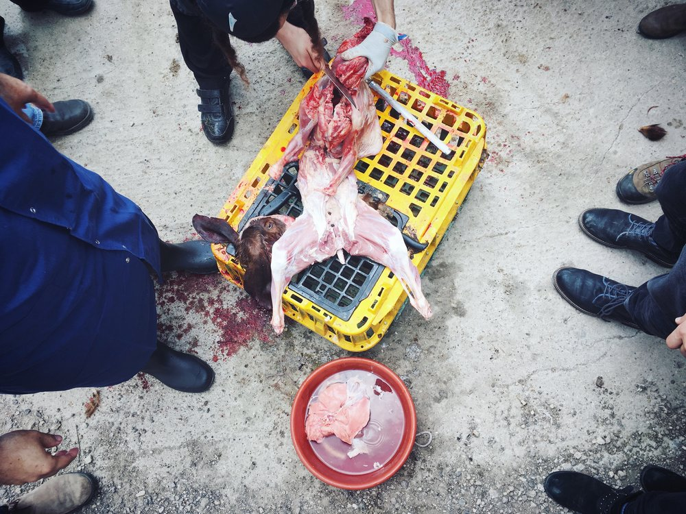 Rabbis talk about Kashrut policy in Israel while performing ritual slaughter on a baby goat