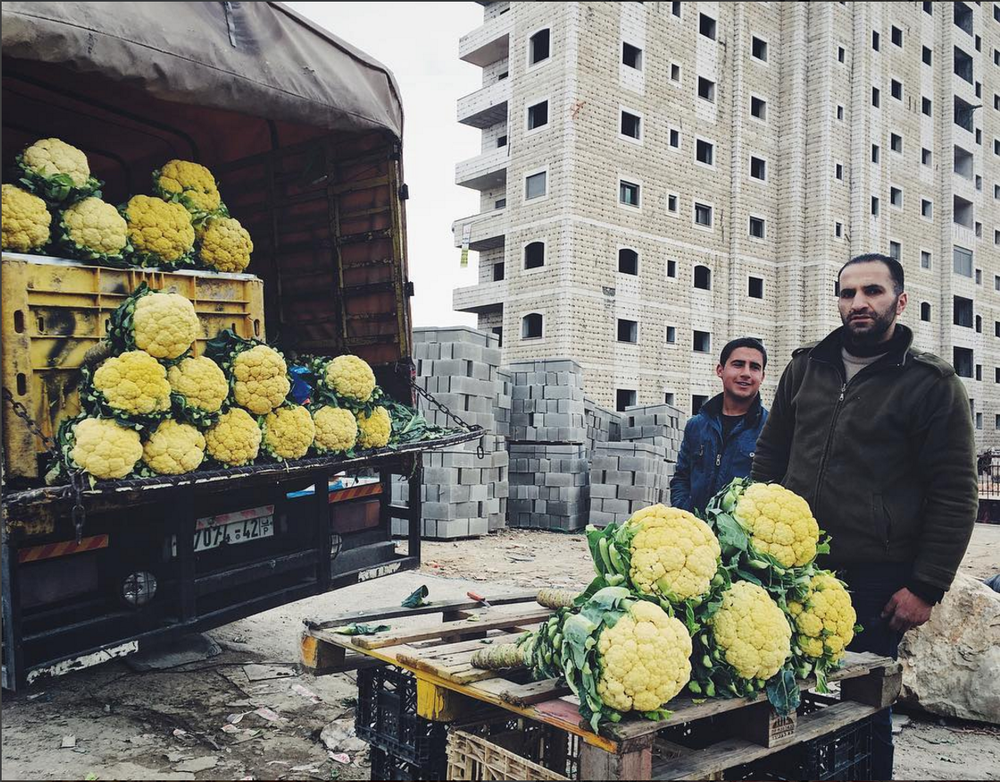 Yellow cauliflower sold outside Qalandiya checkpoint in Ramallah. It is mostly grown in the craggy no mans land between Jerusalem and the West Bank. It's only available for a few weeks in the middle of winter.