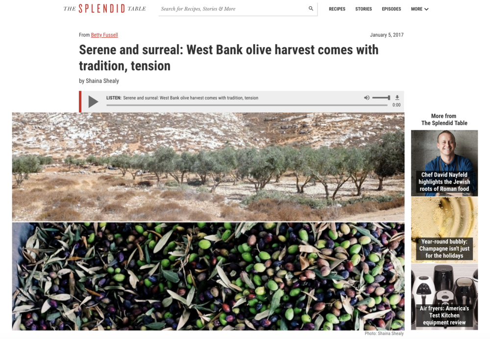 Serene and surreal: West Bank olive harvest comes with tradition, tension