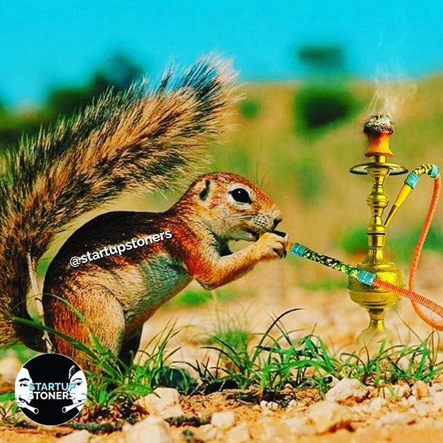 So that's what squirrels do when they can't find a nut 🥜 #startupstoners