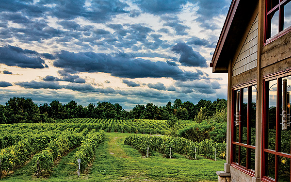 Tabor Hill Winery  - Some of the area's best wine and food have been hiding in Buchanan, Michigan.  But we know the way, we'll fly you and a group there leave you to enjoy the wine and dining and then give you a lift home.