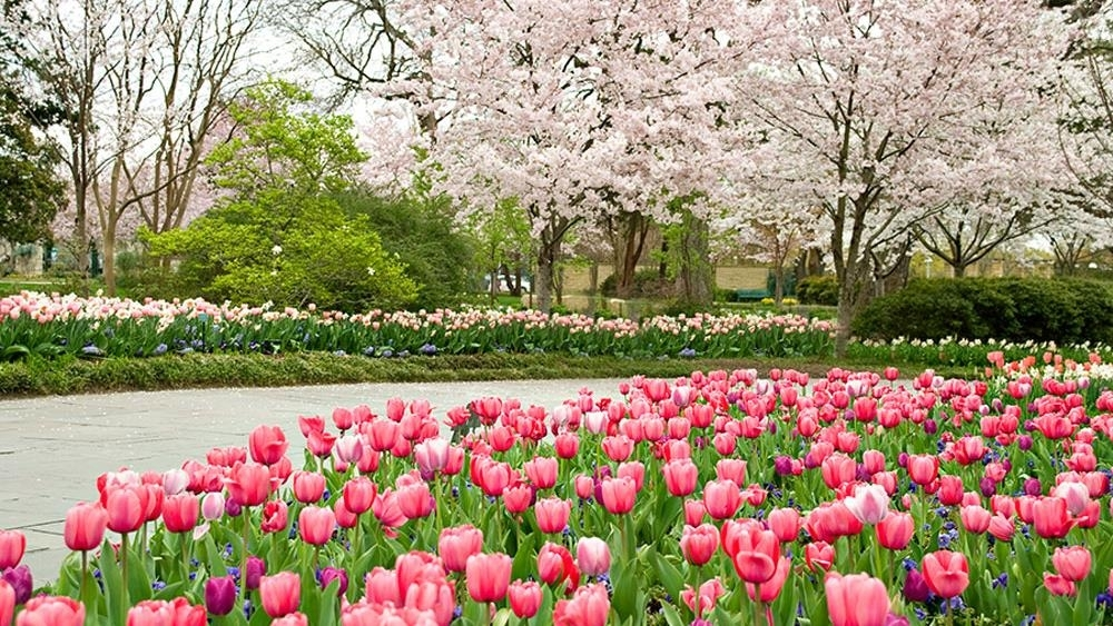 Dallas Arboretum's Easter Weekend Concert and Activities - Age(s): All AgesWhen: Friday-Sun, March 30th-April 1stWhere: The Dallas Arboretum, 8525 Garland Road, DallasLink: Dallas Arboretum