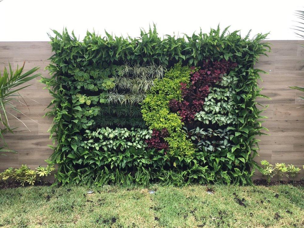 @Samborondón - Jardín Vertical - riego automático - paisajismo denisse robinson