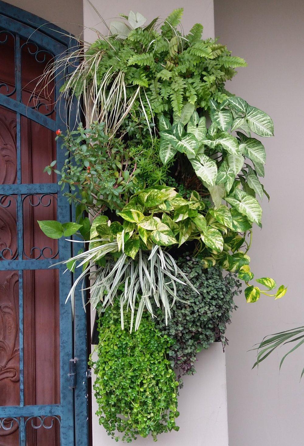 Residencial - Sistema: Morralito - Bioparametro®Paisajismo: @caliptra_arquitectura