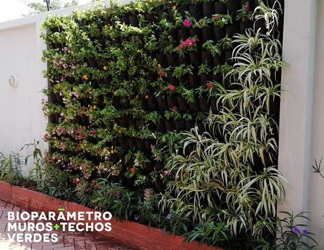 Este hermoso jardín vertical sin duda será el consentido de la casa. 😄🌿💚 #Bioparametro #jardinesverticales #pulmonesverdes #jardinesverticalesecuador #guayaquil