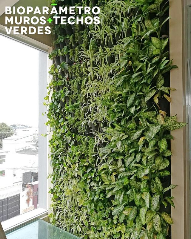 Decora tus ambientes con Jardines Verticales para lograr espacios cálidos y alegres! 😉💚💫 #jardinesverticales #greenwalls  #pulmonesverdes #jardinesverticalesecuador #bioparametro
