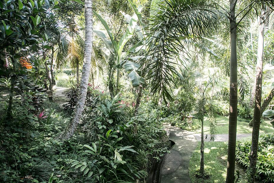 sould garden II.jpg