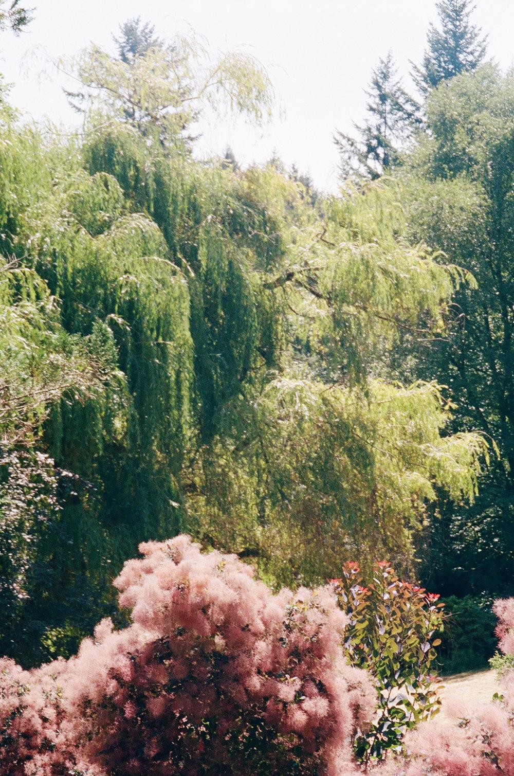 Paintings in Gardens.jpg