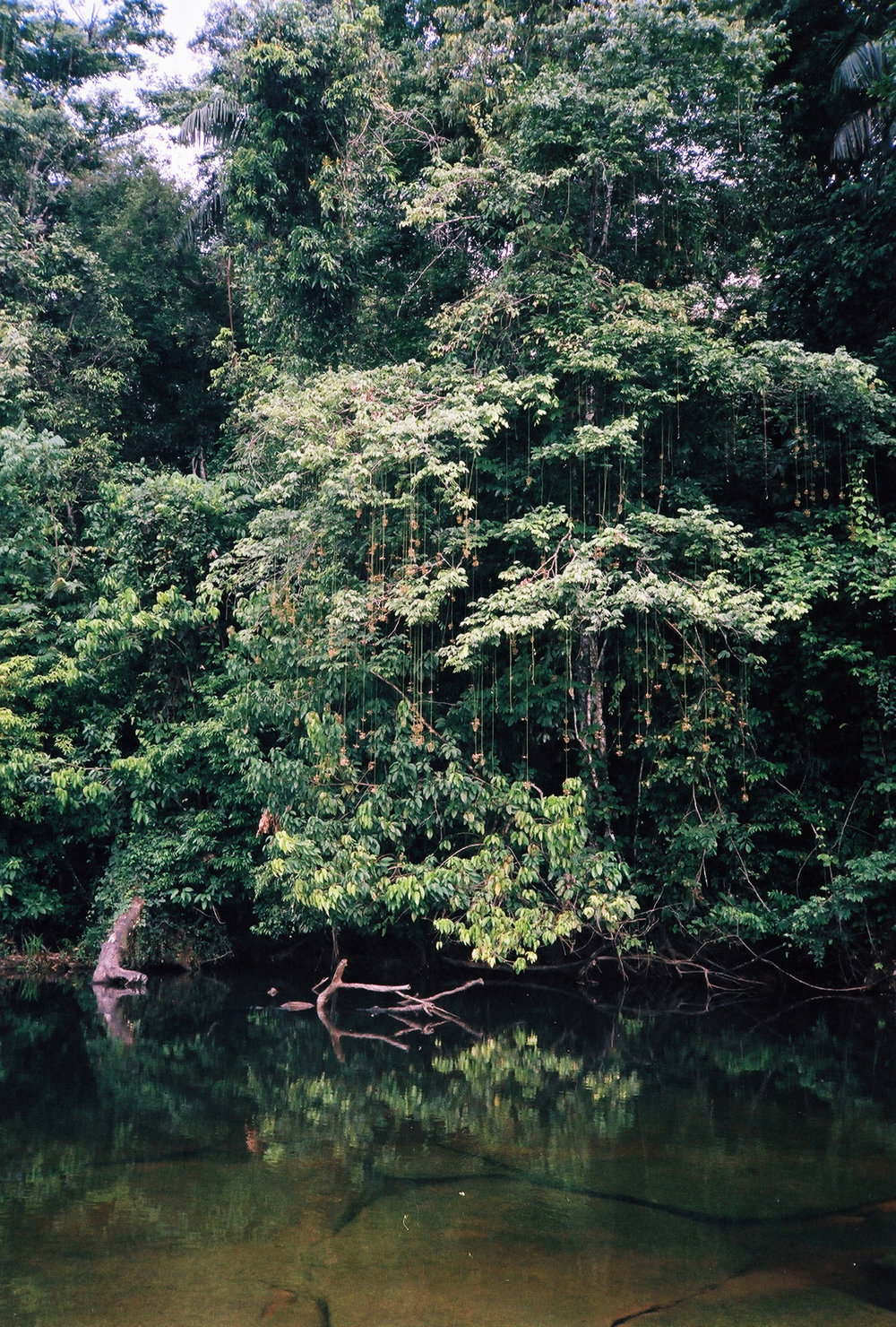 95% of Suriname is rainforest, making it the most green-filled country in the world.  - –––––––––––––––––
