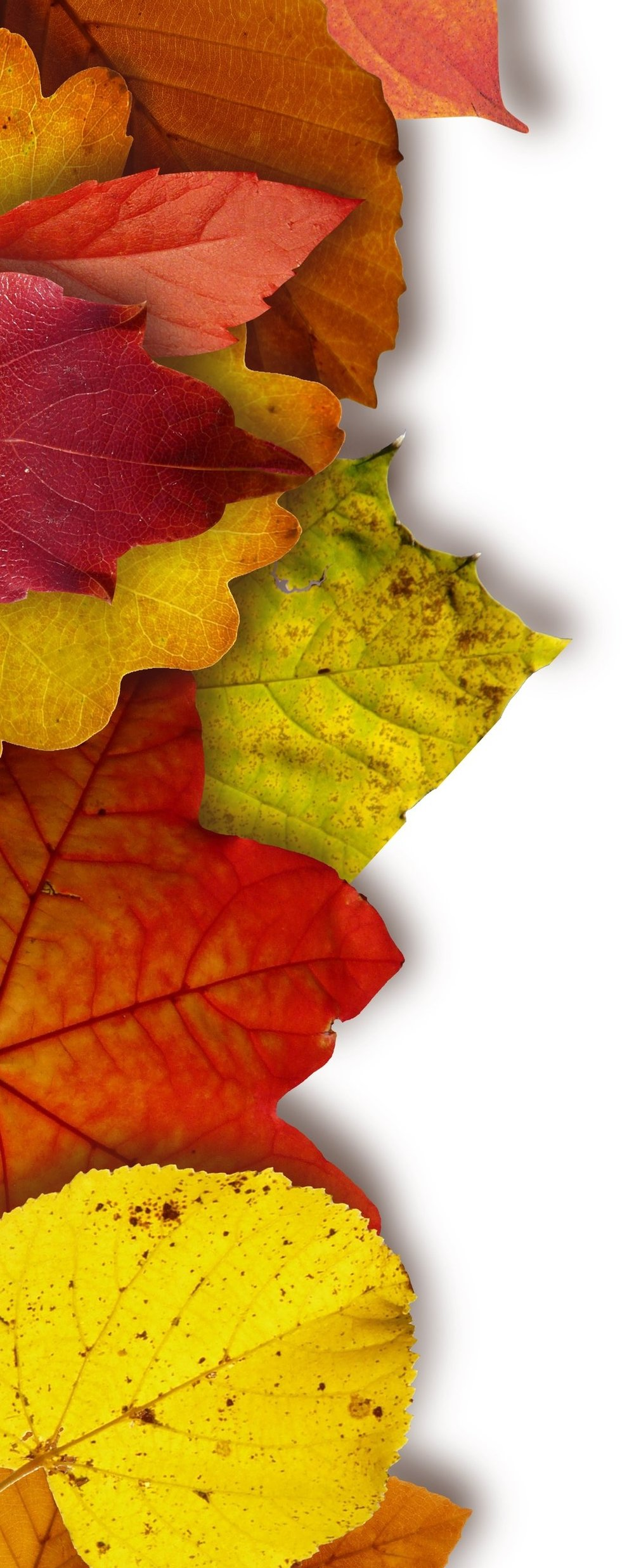 leaves-colorful-color-yellow-64732.jpg