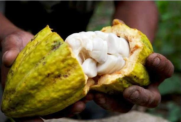 cacao-pod-split-open.jpg