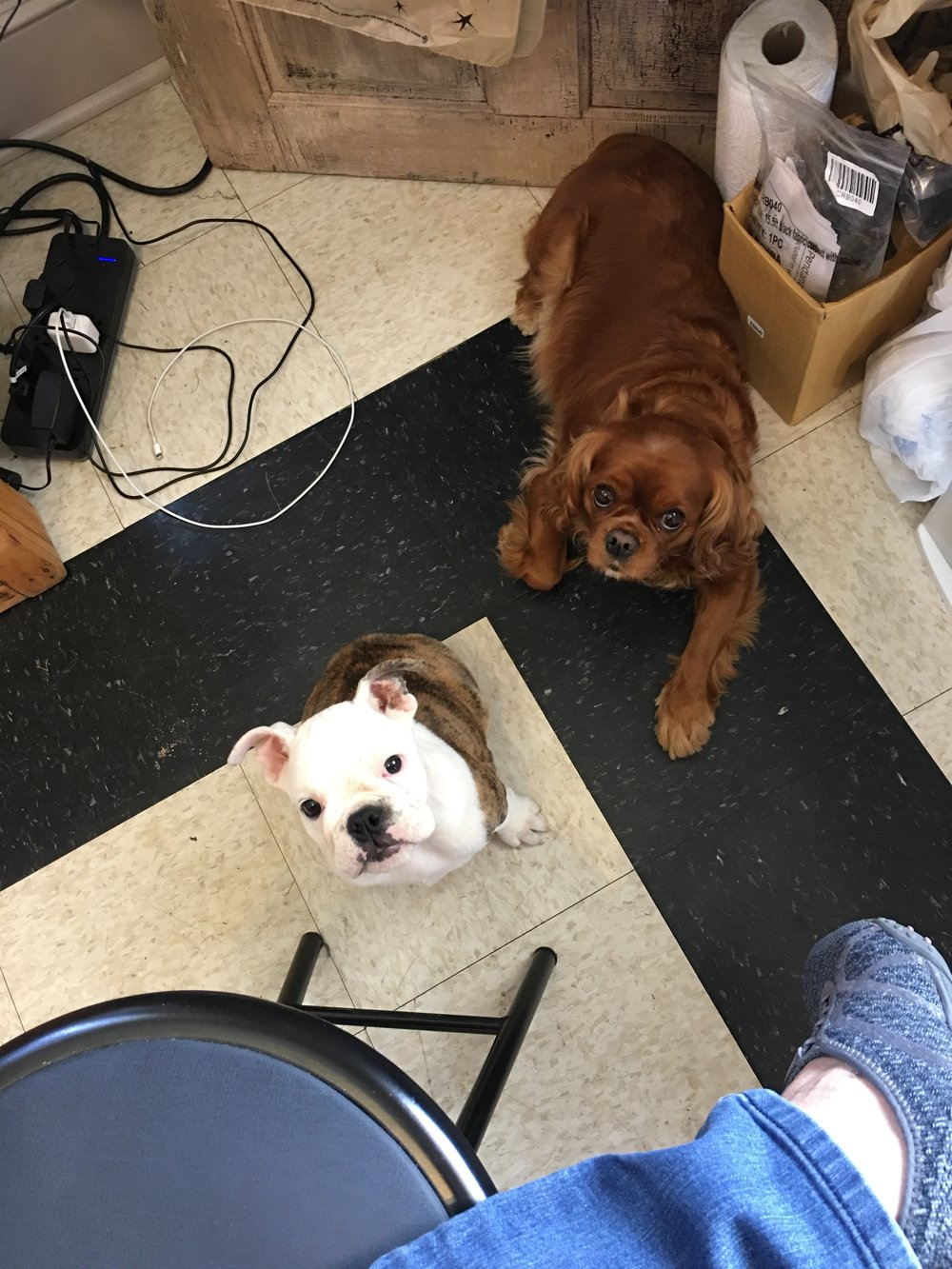 Are you a Dog Lover? - Bella and Tippy are also a part of our expert home decor team! Visit us to get their expert advice - or maybe just a friendly tail wag!