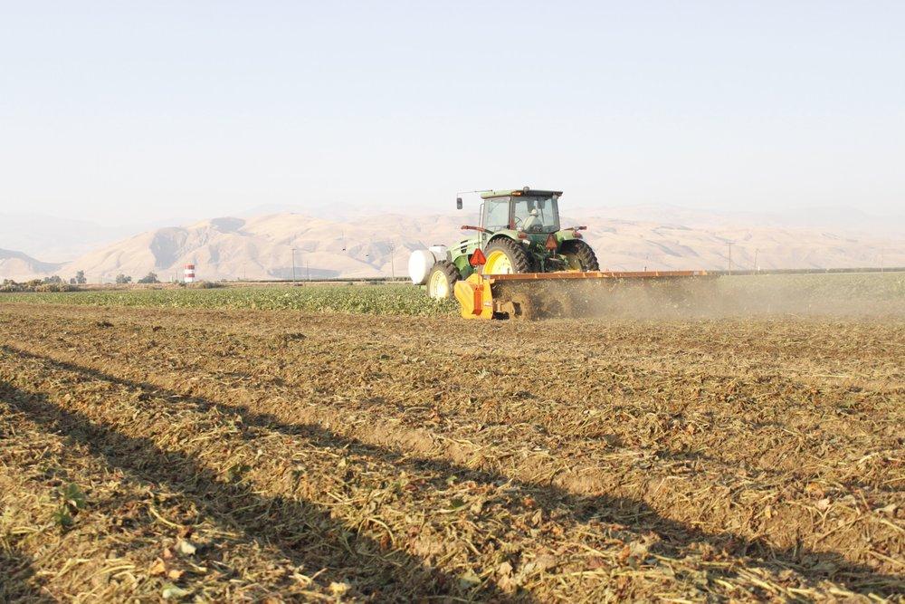 Sweet potato harvest vine shred