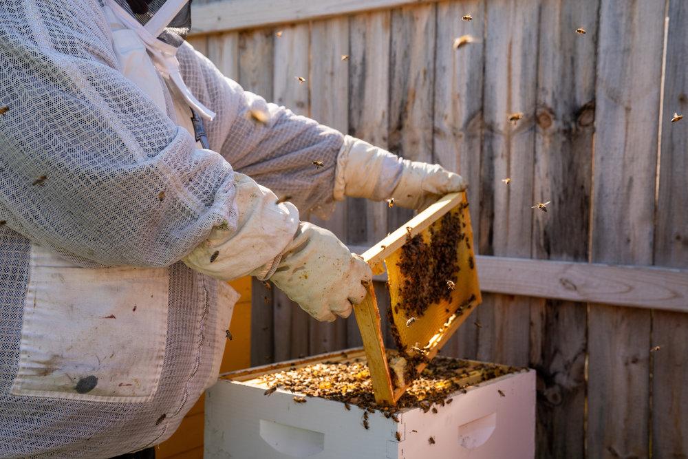 detroit_hives-84.jpg