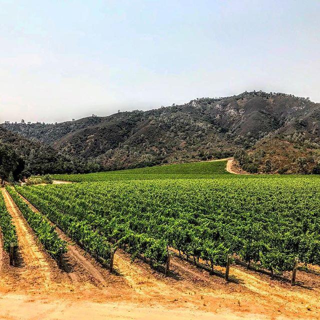 Vineyard views to enjoy with your #winewednesday! . . . #clockspring #vines #cabernetsauvignon #winelover #zeila #makingwineco #amadorwine #sierrafoothills #vines #vineyard #instawine