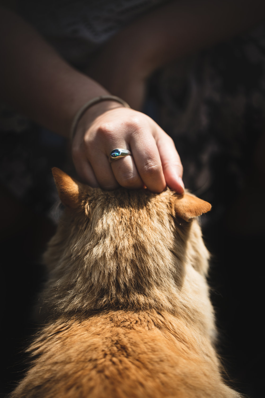 Cathand.jpg