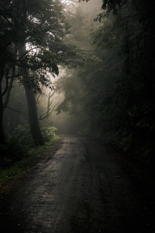 ForestIMG_0237.jpg