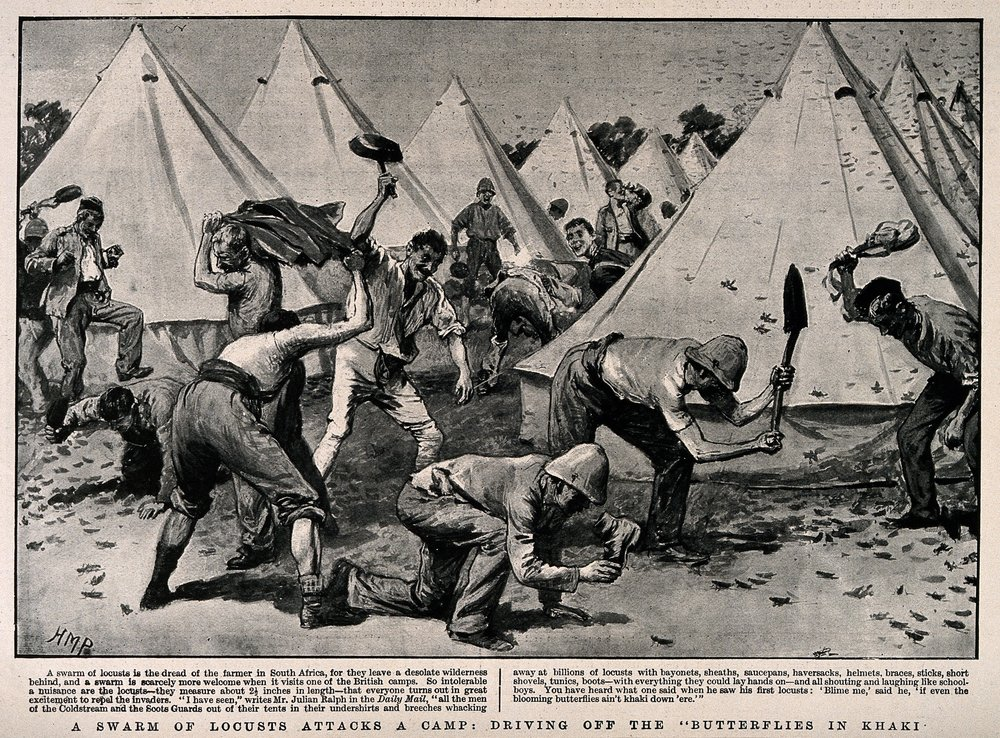 Boer War: soldiers in camp driving off a swarm of locusts with anything to hand. Halftone, c. 1900, H.R. Paget; Welcome Collection
