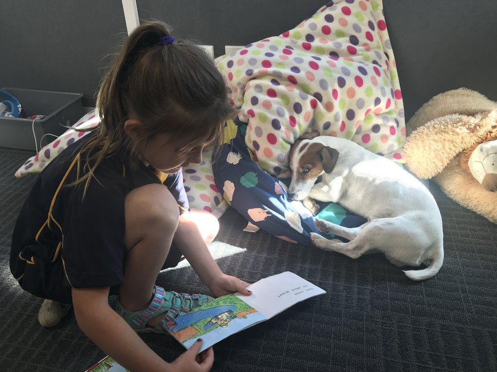 Taylor reading to Vuk, our school reading dog.