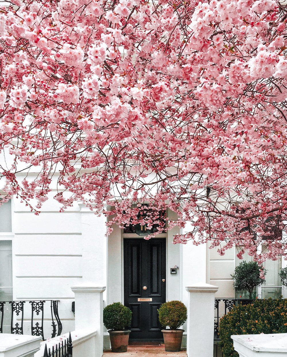 Ellie Dyduch - Notting Hill Cherry Blossom London