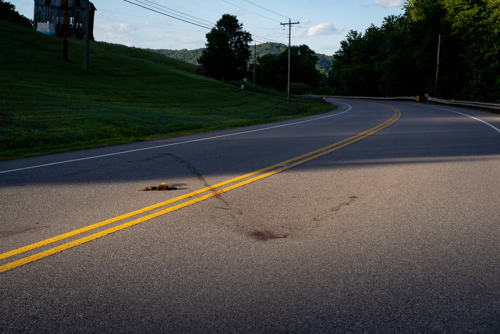 Road_Kill_For_Website_00002.jpg