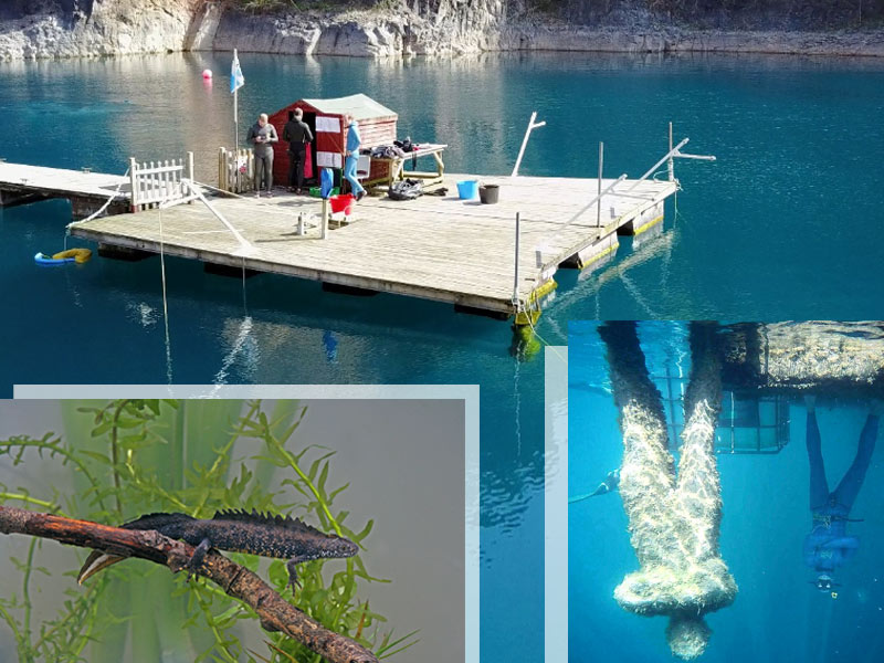 Our training pool with Saltfree Divers in Chepstow. Inset (left) -  a Great-crested Newt (c/o Wildiaries iStockphoto) is among the most exotic wildlife we see while diving in the quarry. Inset (right) - what happens to divers if they spend too long underwater in temperatures of ten degrees!