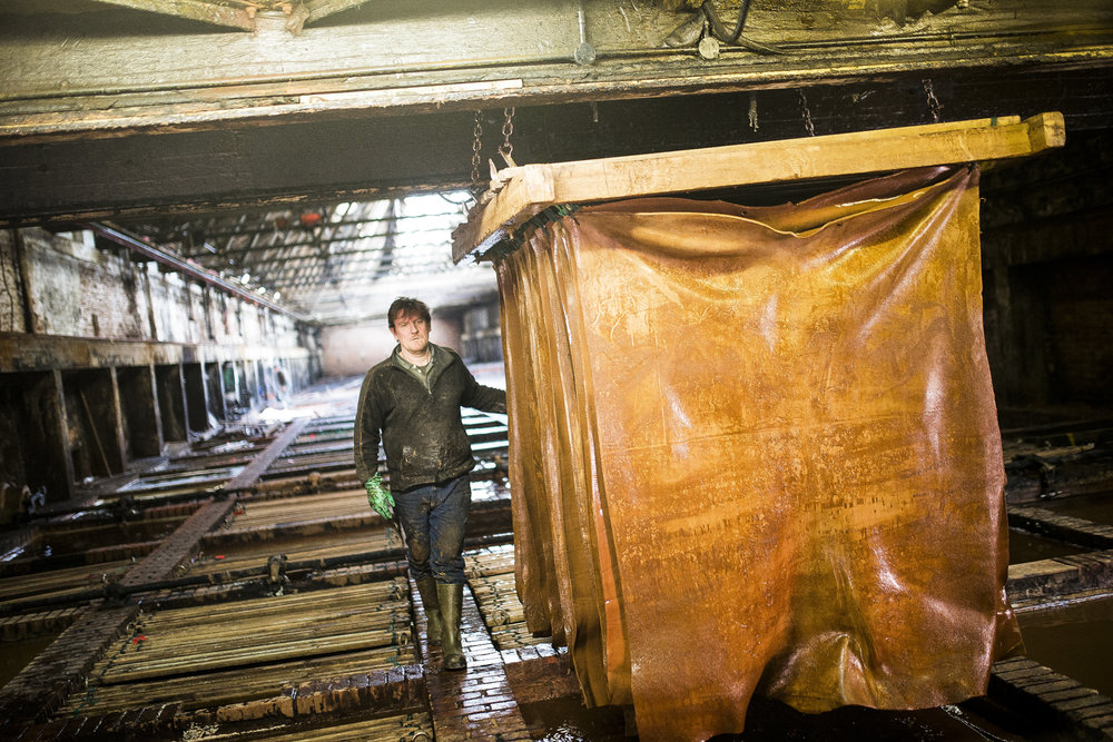A worker inspects a selection of hides currently undergoing the tanning process in order to become leather, at the Thomas Ware & Sons Tannery in Bristol.