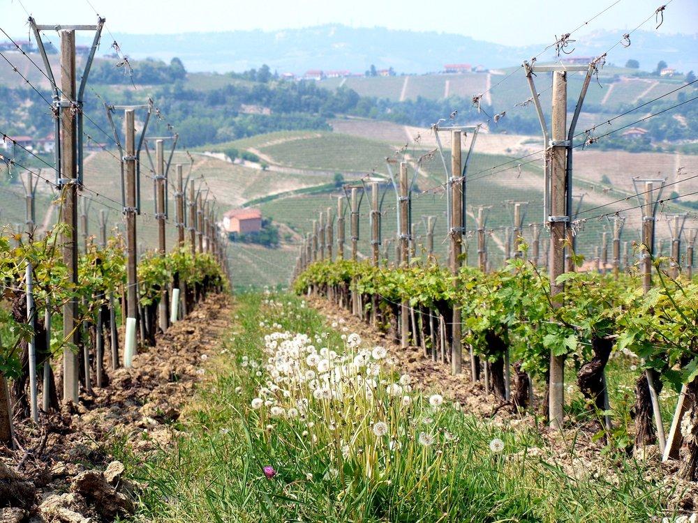 Piedmont Region, Italy