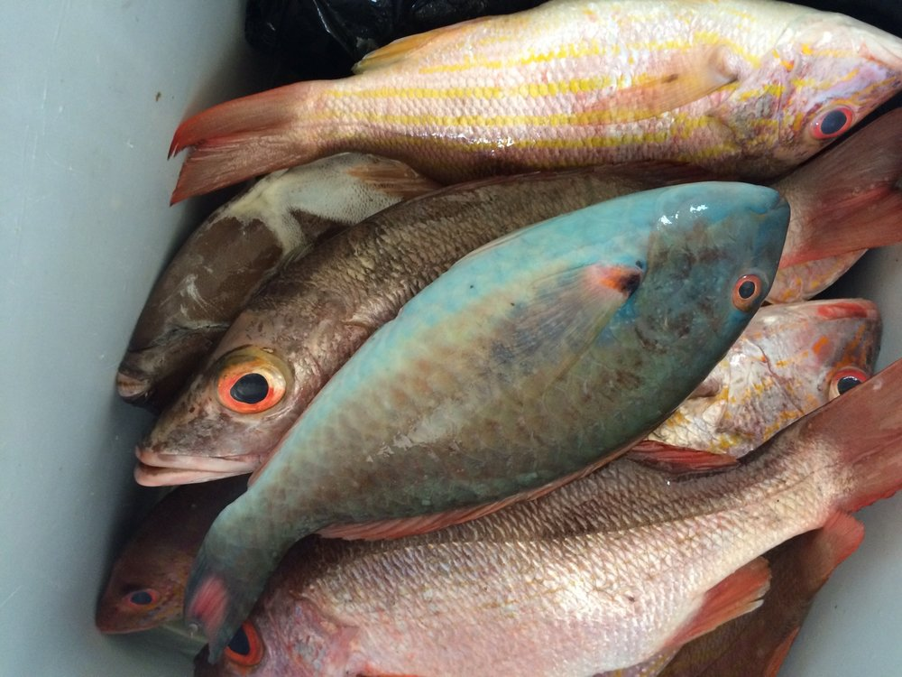 Fishery Assessment and Sustainability -