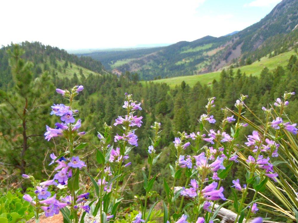 Chautauqua wildflowers1.jpg