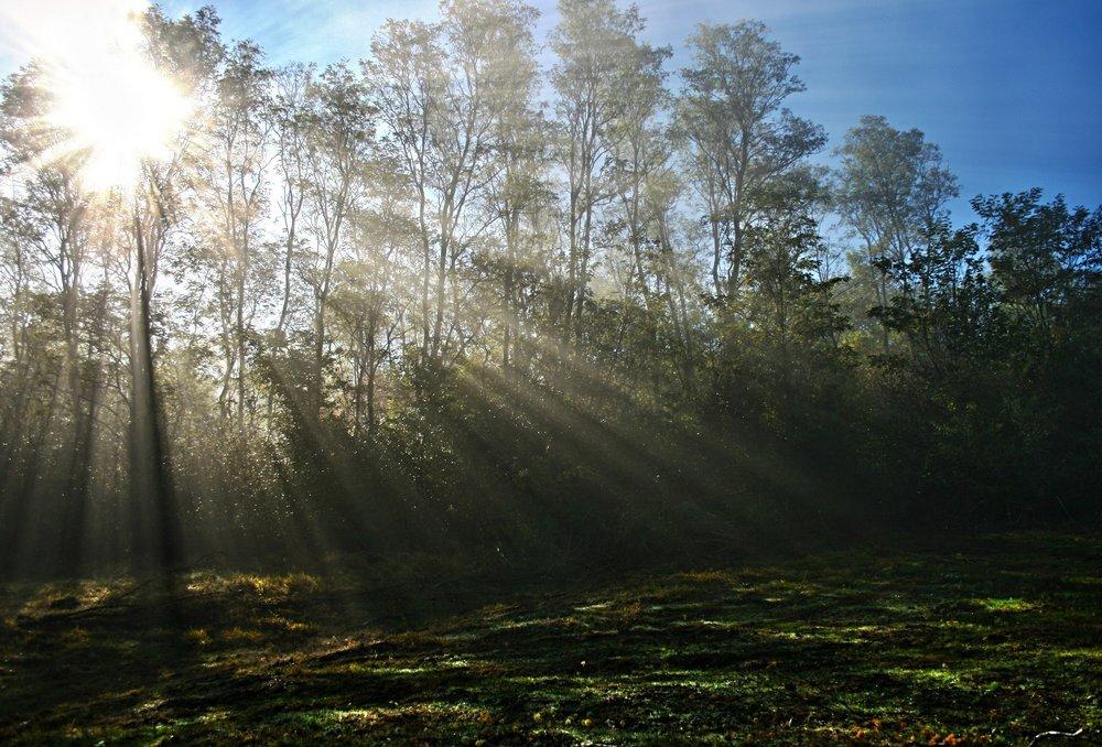 mist-481710_1920.jpg