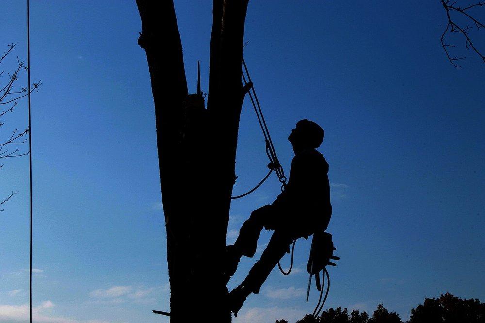 tree-service-1059484_1280.jpg