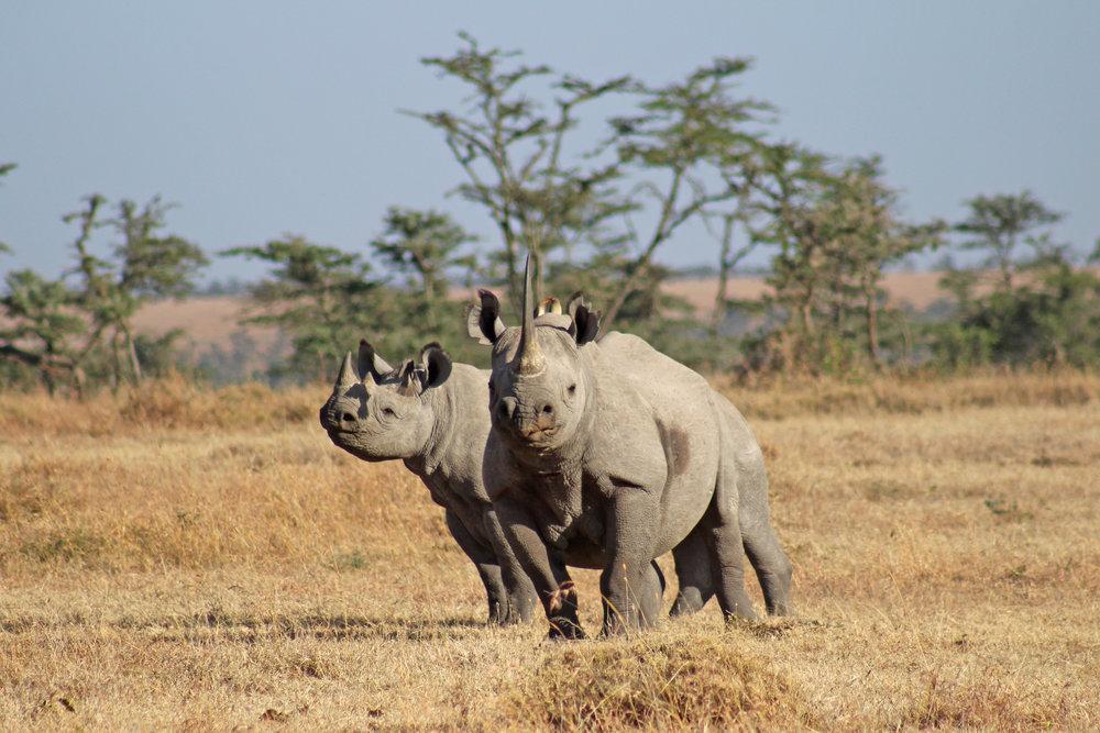 Ali - Rhinos.jpg