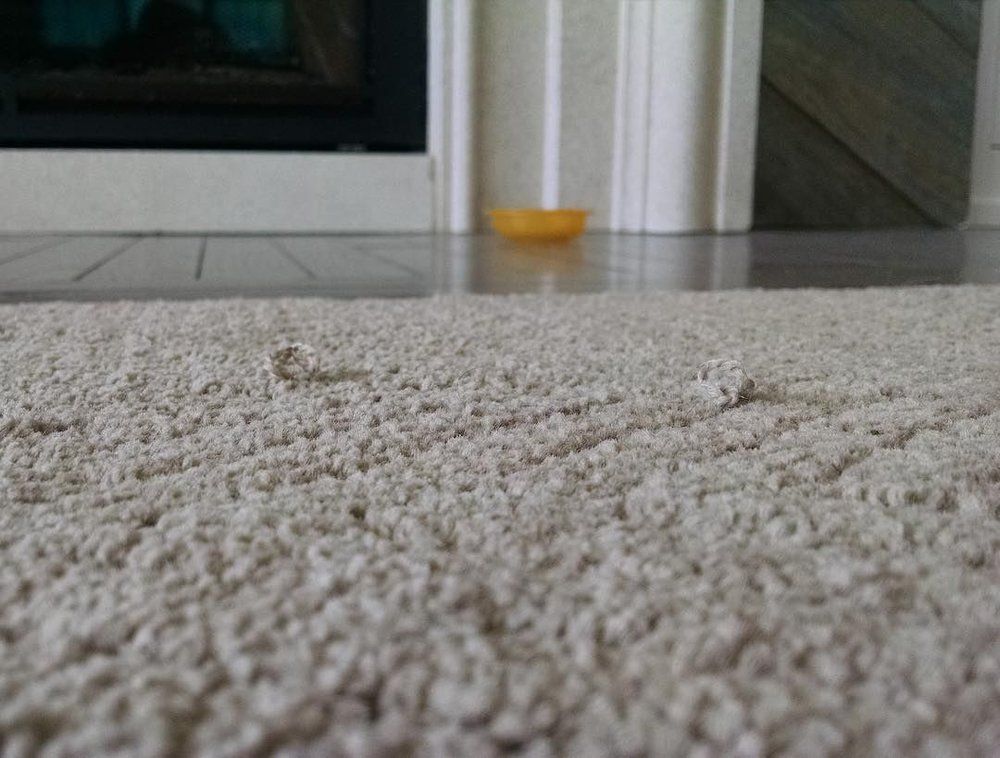 top reasons to replace carpet with hardwood floors 3.jpg